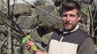 Vögel – die Herrscher der Lüfte. Das Vogelrevier des Walter Zoos.