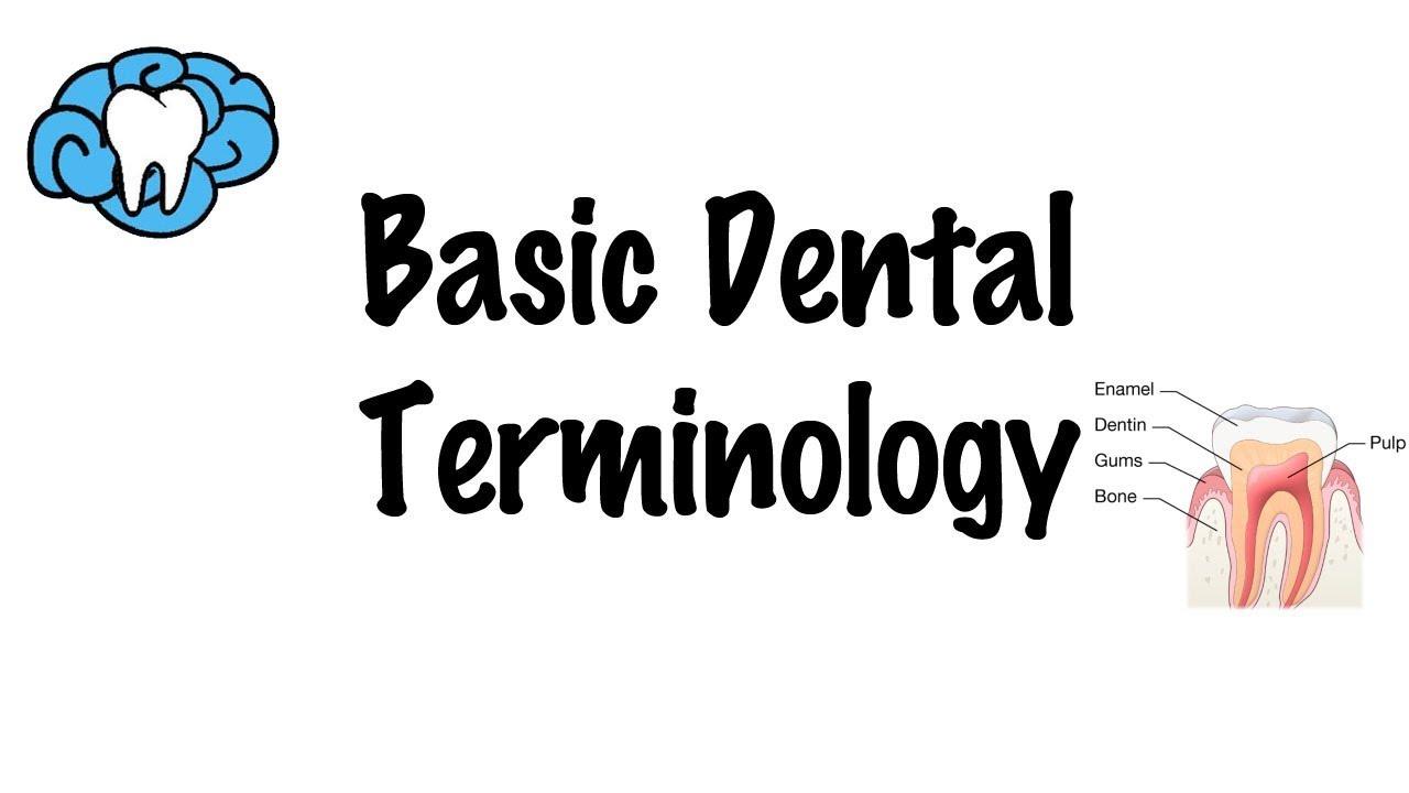 Basic Dental Terminology