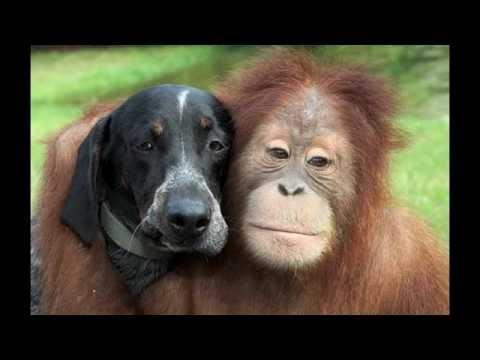 Orangutan Suryia Amp Hound Roscoe I Only Have Eyes For