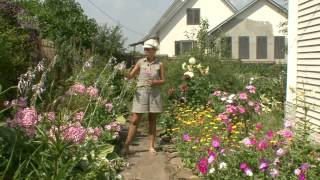 Дизайн цветников. Цветник ситцевый эффект. Часть 11(Цветник -- это особый элемент декора садового участка, это совокупность цветов, собранных вместе на одном..., 2013-12-28T23:54:23.000Z)