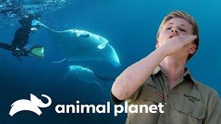 ¡Manta raya golpea la cara de Robert Irwin! | Los Irwin | Animal Planet