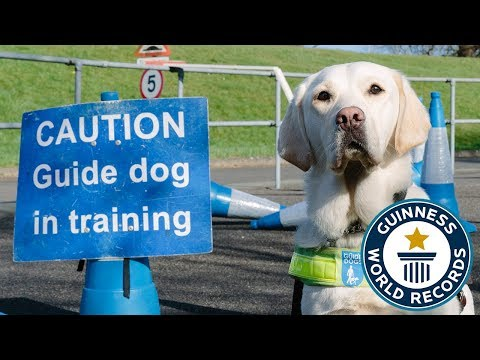 How to train a guide dog – Guinness World Records