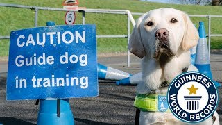 How to train a guide dog - Guinness World Records