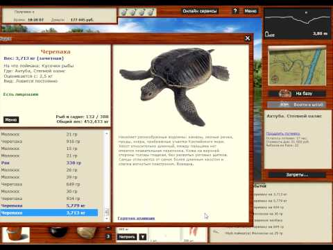 как ловить черепаху в море