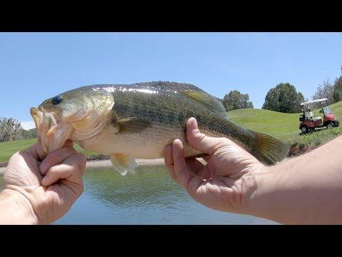 Sedona Bass Action