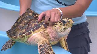 RVAnimals - The Turtle Hospital at Marathon Key, Florida
