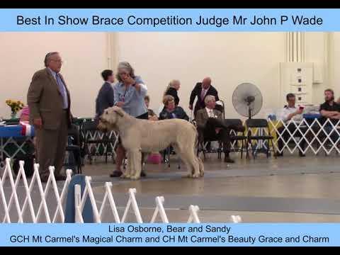 8-11-2018 Arkansas Kennel Club - Brace - Irish Wolfhounds
