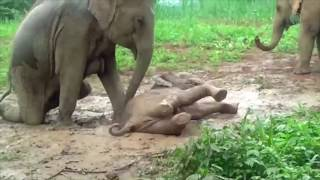 Elephant helps baby to stand from the slippery play pit