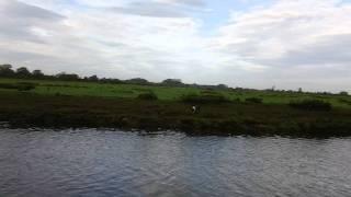 Gundog Training English Springer Spaniel Water Retrieve Canvas Dummy
