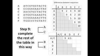 Erstellen Sie einen Phylogenetischen Baum