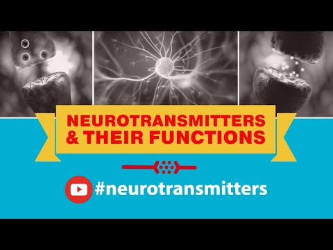 Neurotransmitters and Their Functions