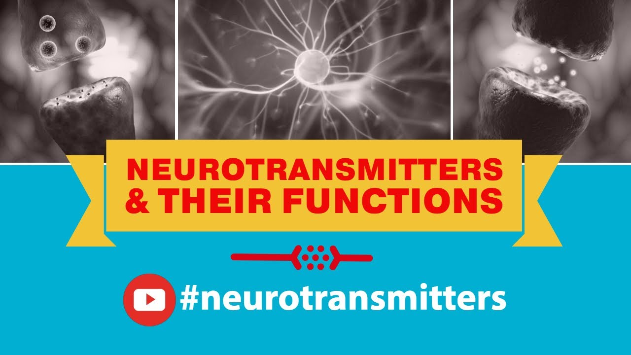 Neurotransmitters and their functions youtube neurotransmitters and their functions ccuart Image collections