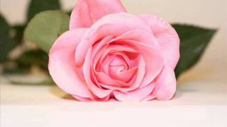 3ammar-Eldek-Wara2-Elward-/عمار الديك عورق الورد.wmv