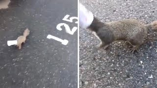 Girl Rescues Squirrel With Head Stuck In Yoghurt Pot