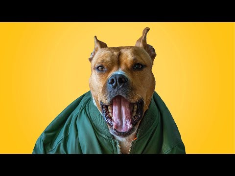 😍 Funny Talking Dogs 🐕 Compilation