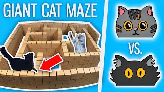 I Built a GIANT Cat Maze  Who Will WIN?!