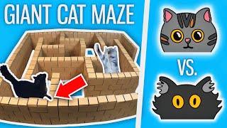 Ralph Vs. Bella  GIANT Cat Maze
