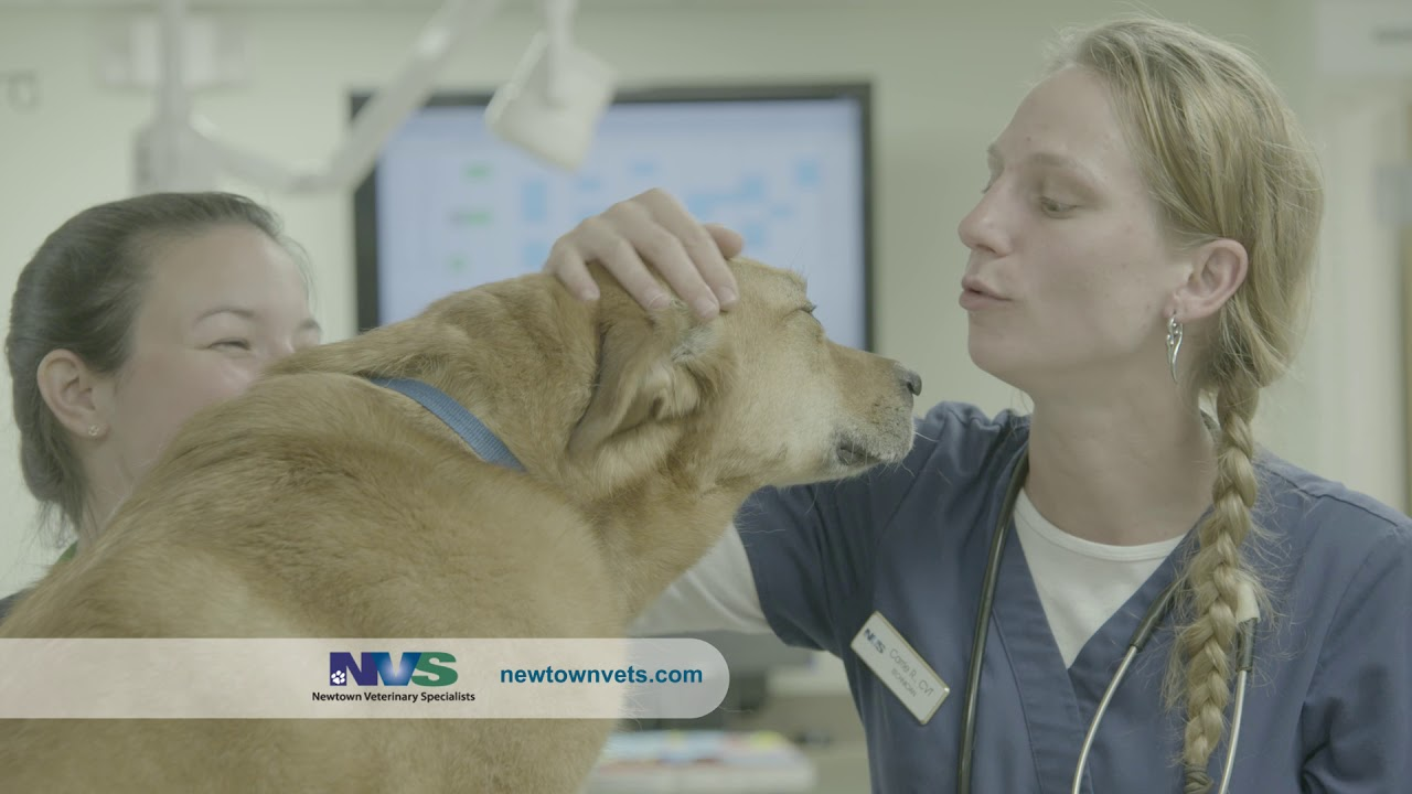 Newtown Veterinary Specialists - 24 Hour Emergency Animal Hospital