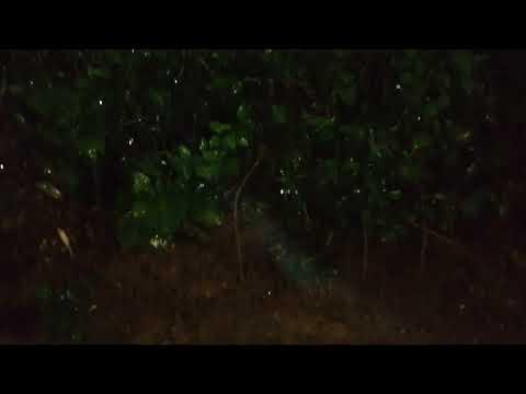 Night tropical rain at Oxygen Jungle Villas 5 star hotel (Uvita – Costa Rica) (2/2)