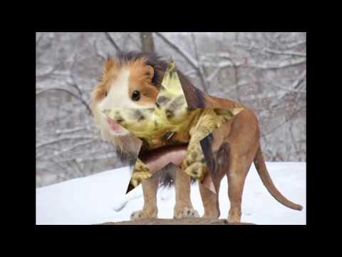 Top 10 Most Bizarre Species Animal Planet | Strange Animals