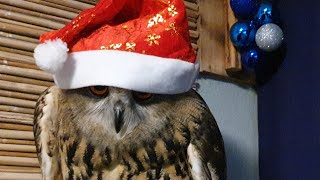 "The ""spirit"" of Christmas and New Year. Very evil spirit. Just a resenting owl!"