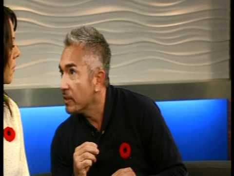 Cesar Millan and Clever Canines