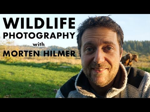 WILDLIFE PHOTOGRAPHY With MORTEN HILMER (Interview) - Our Epic World