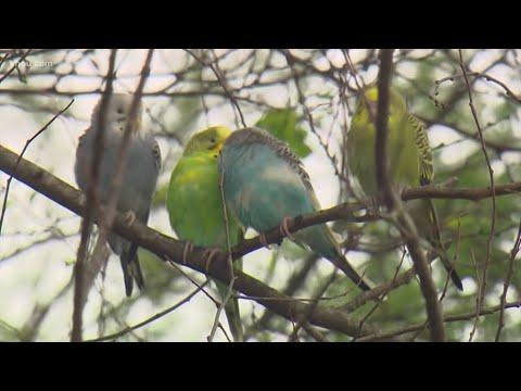 Dozens Of Parakeets Dumped In West Houston Park