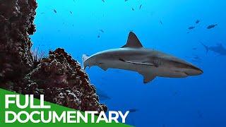 Underwater Volcanoes  Oases of the Sea | Free Documentary Nature