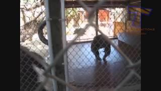 Смешное видео про животных.3 Смех до слез!!!