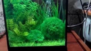 аквариум с искуственными растениями