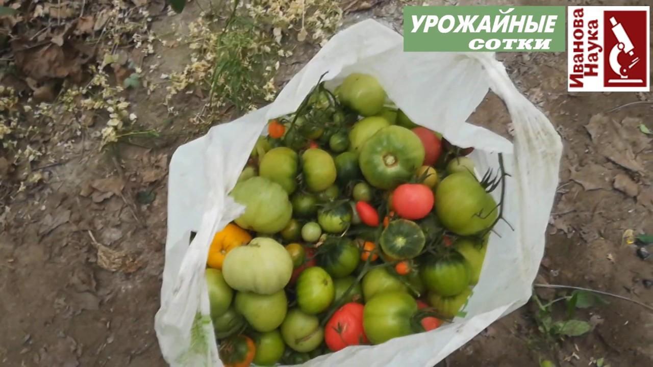 Культура томата завершена. Что делать дальше? Ботву томатов и картофеля - в дело!