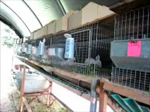 rabbit-cage-rack-upgrade---easier-cleaning