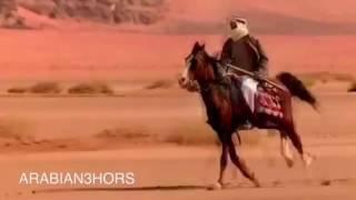 شعر وصف الخيل العربي Horses