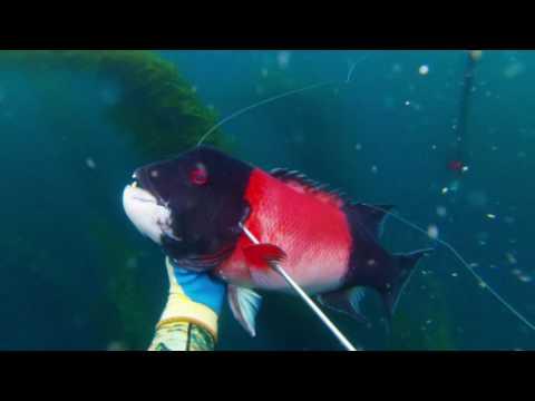 Spearfishing Santa Barbara 2016 Fall