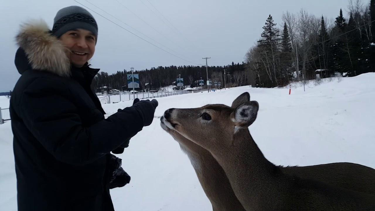 29. West Hawk Lake-Манитоба, Иммиграция в Канаду, Ручные Олени, Отдых зимой- Feb 2019