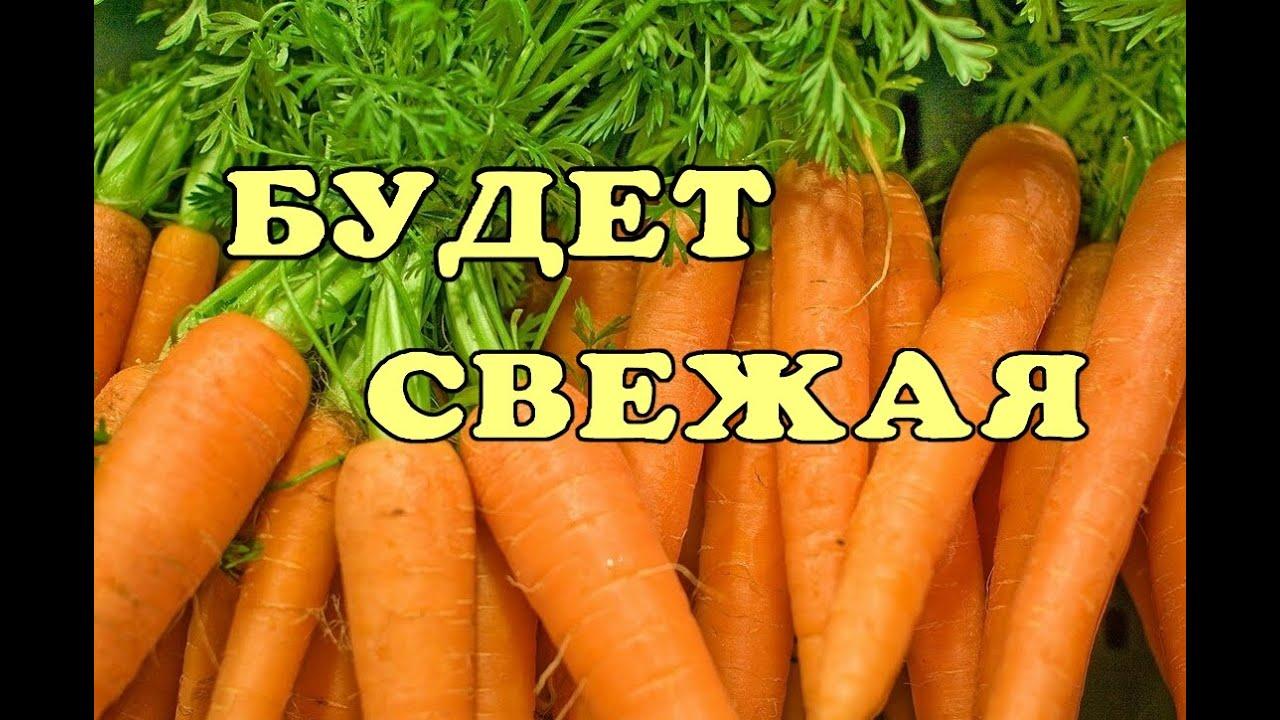 Простой способ сохранить морковку.