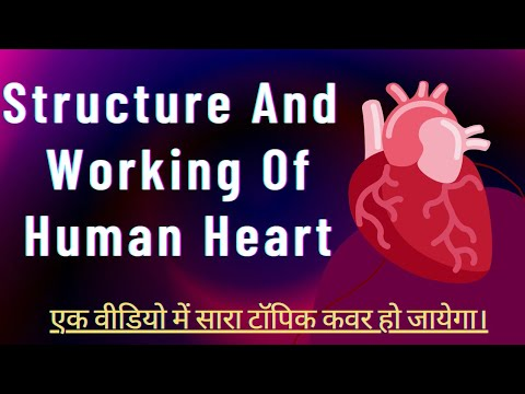 Function of Heart in human body in Hindi - YouTube