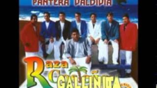 RAZA COSTEÑA - LA GALLINITA