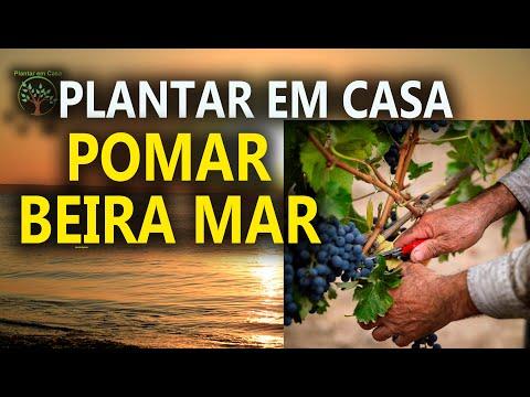 TER UM POMAR BEIRA MAR É POSSÍVEL ? 3/5 Plantar em Casa