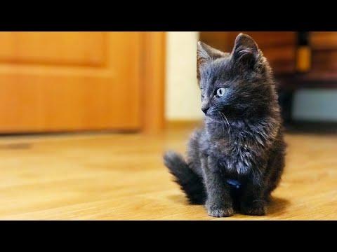 Вопрос: Правда ли что сложно взять кота из приюта?
