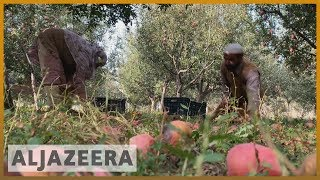 Kashmir farmers struggle from India restrictions