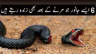 Mout k Baad Bhi Zinda Rahny waly Janwar | Urdu / Hindi