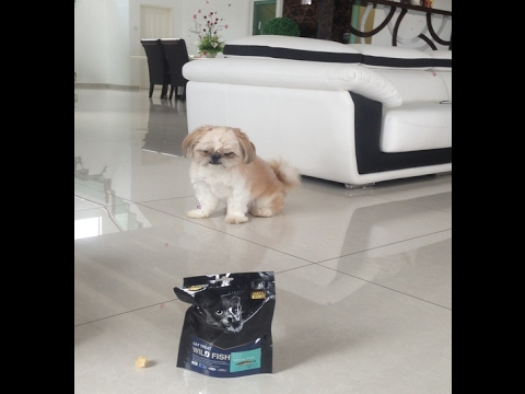 pets-kampong---will-my-shih-tzus-love-cat-treat?