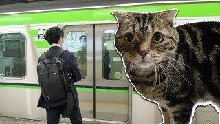 Ежедневная Япония, по Токио на метро, японский кот Луффи