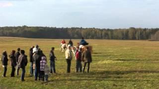 Hubertus 2012 - pogoń za lisem