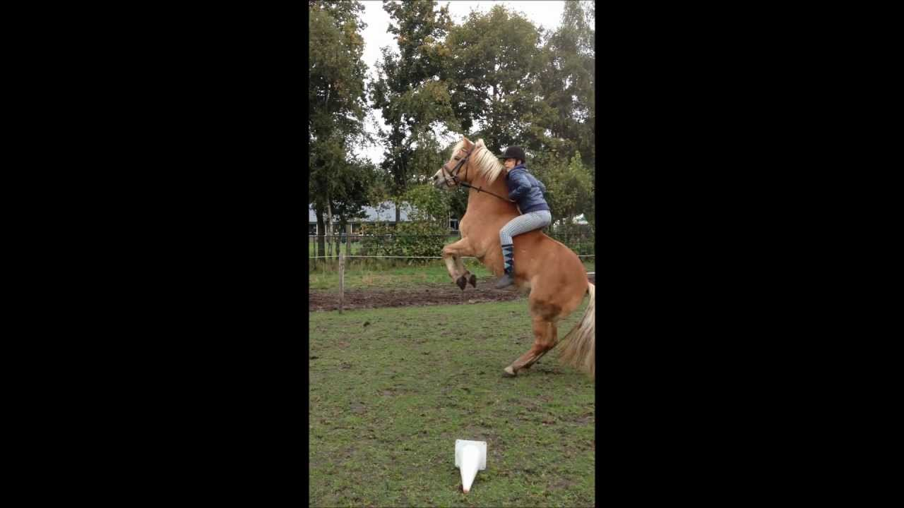 HORSE-BLOOPERS