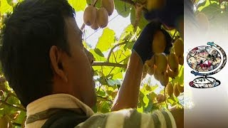 What Can Australia Do About Illegal Migrant Workers?