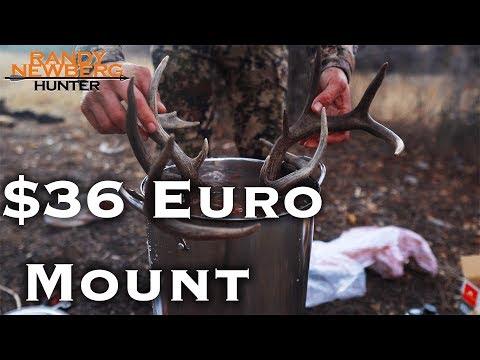 How To Do Your Own Deer Skull European Mount for $36
