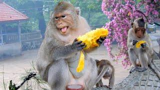 Emila Is Afraid Monkey Rany Grab Foods Of Her